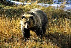 grizzly bear pie grizzly bear pie recipes dishmaps grizzly bear pie ...
