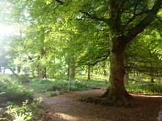 Tomnafinnoge Woods