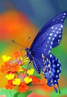 Different Types of Butterflies Butterfly Painting, Butterfly Wallpaper, Butterfly Flowers, Blue Butterfly, Types Of Butterflies, Flying Flowers, Photos Of Butterflies, Most Beautiful Butterfly, Beautiful Bugs