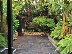 Last week, I was asked to create and work on a number of small garden spaces. In Ridley Avenue, Northfields, I was asked to bring a touch of the exotic to Small Space Gardening, Garden Spaces, Tropical Plants, Tropical Gardens, Garden Solutions, Back Gardens, Summer Garden, Garden Inspiration, Garden Design