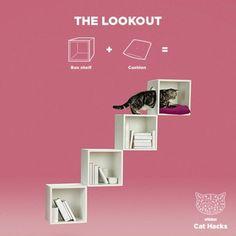 The Lookout IKEA Cat hack #catscarehacks
