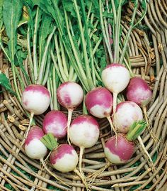 Get Your Veggie Garden Started! Here's What You Can Plant in March!peas beetroot kale parsnips carrots spinach herbs4