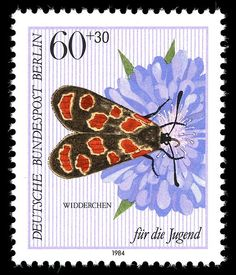 Widderchen  (Zygaena filipendulae) .The six-spot burnet , is a moth .German postage stamp 1984.