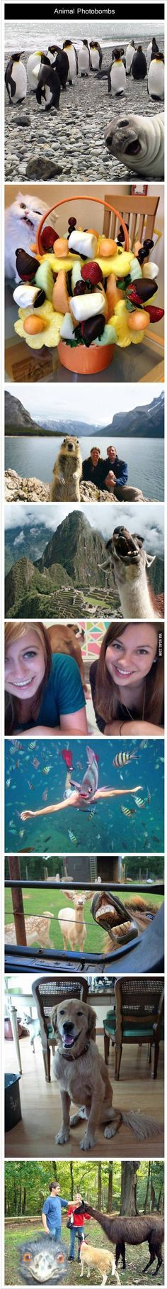 Animal photobombs - This made me laugh a lot more than it probably should have. But that could just be the insomnia talking...