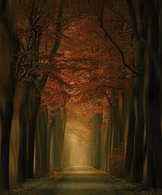 Image result for Rob Visser Tree magic
