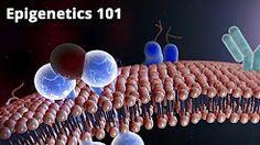 (30) epigenetics - YouTube