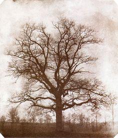 William Henry Fox Talbot - Tree - Calotype, 1842