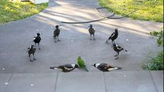 PsBattle: Magpies around a Lorikeet Image Center, Photoshop Me, Graphic Design Software, Photo Work, Baby Dogs, New Image, Old Photos, Dog Cat, Cats