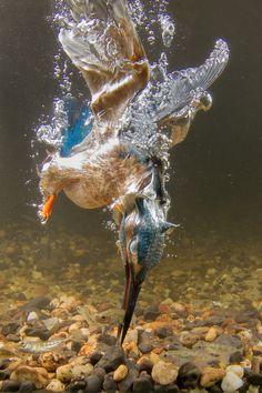 Holland - Natuur in de Delta | Foto van de maand genomineerden augustus