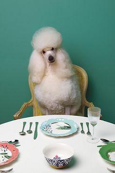 #AnthroRegistry Nature Table Dessert Plate, Chameleon - anthropologie.com