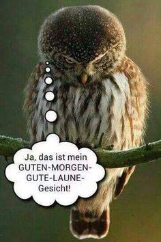 153 Besten Guten Morgen Bilder Auf Pinterest Buen Dia Funny