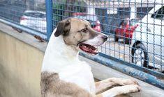 Cães e gatos podem ter vírus da covid-19, mas não transmitem a doença - SHD Mundial Brasil   Seja Hoje Diferente