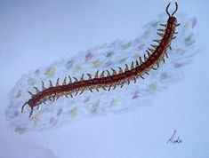 How to draw: A Centipede Drawing Lessons, Animal Drawings, Rocks, Pretty, Artist, Blog, Painting, Animals, Animales