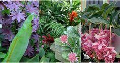 35 imágenes llenas de la belleza tropical más exuberante. ¿Os gustan las plantas?