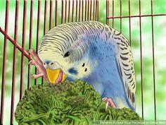 Image titled Amuse Your Parakeet or Other Bird Step 1 Parakeet Care, Parakeet Toys, Cockatiel Care, Parrot Pet, Parrot Toys, Exotic Birds, Colorful Birds, Parrot Facts, Budgies