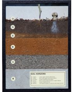 KIT: Soil horizons display Rock Cycle, Earth Surface, Oil And Gas, Planet Earth, Planets, Science, Display, Kit, Billboard