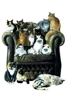 Leather chair - good idea! Far easier to wipe all that cat hair off!