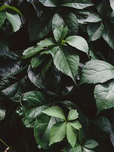Foliage.