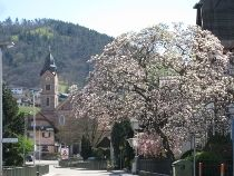 St. Michael's Church, Buehlertal.  All ancestors were baptized/married/buried from this church from 1750s on.