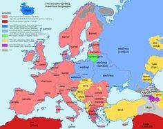 'Camel' in various European languages.