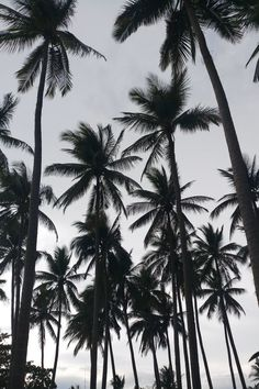 Engaging Palm Tree Shadow On Wall Photos Pexels · Free Stock Photos Laptop Wallpaper, Videos Instagram, White Sky, Black And White Aesthetic, Phone Photography, Sea Photography, Photo Tree, Chicano, Phone Backgrounds