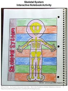 Interactive Notebook activities for the skeletal system - parts of ...