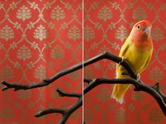 Claire Rosen's birds of paradise - in pictures
