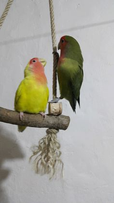 via GIPHY #lovebird #lovebirds #gif #swing #yellow #green #photos #animal