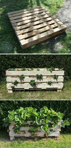 Strawberry Pallet Planter | 12 Creative DIY Pallet Planter Ideas for Spring | Beautiful Pallet Gardening Crafts, check it out at http://diyready.com/pallet-projects-gardening-supplies/