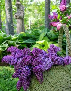 Purple and Lilac Flowers Lilac Flowers, My Flower, Beautiful Flowers, Flower Art, Lilac Bushes, Deco Floral, All Things Purple, Lily Of The Valley, Shades Of Purple