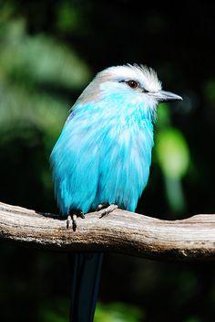 Tropical bird so tiny and cute.