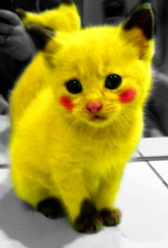 The Pikachu Kitty Cat. only because it is a Pikachu Chat Pikachu, Cat Pokemon, Pokemon Fan, Pikachu Funny, Pokemon Names, Pokemon Room, Pokemon Stuff, Funny Minion, Cute Funny Animals