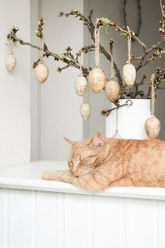 OUR GINGER KITTY PRINCE Egg Dye, Easter Eggs, Prince, Shabby, Kitty, Country, Blog, Beauty, Little Kitty