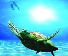 The Sultanate of Oman has taken on a different edge – protecting the sea turtles that come ashore every summer.