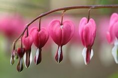 Blossom, Bloom, Pink, Macro, Garden
