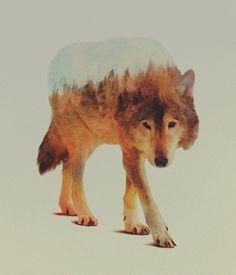 Les photographies animales «superposées» de Andreas Lies | Mr…  Plus de découvertes sur Souterrain-Lyon.com