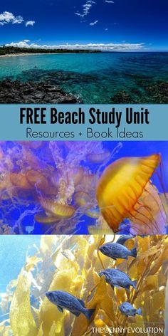 Ocean Books for Kids (Beach Unit Study) FREE Beach Study Unit Resources + Children's Book Ideas Ocean Activities, Educational Activities, Learning Activities, Childcare Activities, Ocean Day, Ocean Life, Ocean Unit, Ocean Crafts, Beach Kids