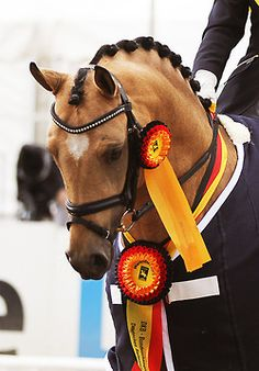 The colors in the ribbons complement this lovely nicely- also, sparkly browband. Approved.