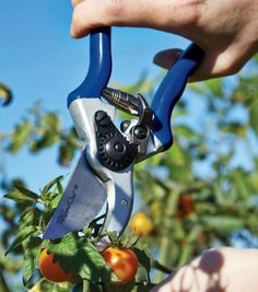 The new garden shears are one of the best new tools to work in your garden and around your yard. Heavy duty construction and a wonderful new design makes your outdoor projects easier and more enjoyable!
