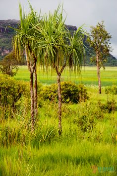Arnhem Land, Northern Territory - One of the most sacred places to visit in Australia on our road trip!