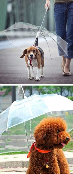 Dog Umbrella | SO cUte!