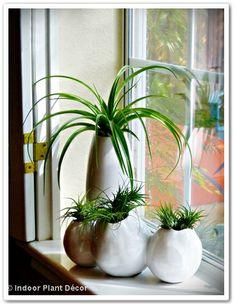 "Our Little Acre: "" 'Indoor Plant Décor' - It's Everywhere!"""