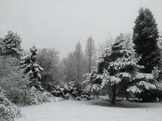 Peacefull bliss in my backyard