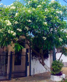 Jazmin Magno .Asunción -Paraguay