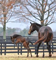 This daughter of Tapit and mama Wild Gams seems to be loving the spring rains in Lexington at Stonestreet Farm! She's pictured here at only two days old.