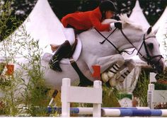 Milton - the phenomenal British show jumper, with John Whitaker. By Marius (KWPN) out of Irish Draught Sport Horse mare Aston Answer.