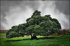 Tree Of Wonder by *Estruda