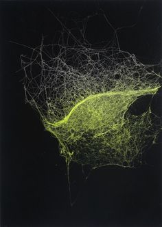 Sandra Selig, Universes 2007. Spider silk, enamel and fixative on paper. 42 x 29.5cm