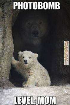 Polar Bear Cubs and Mother wallpaper. Cute Baby Animals, Animals And Pets, Funny Animals, Wild Animals, Especie Animal, Mundo Animal, Beautiful Creatures, Animals Beautiful, Beautiful Images