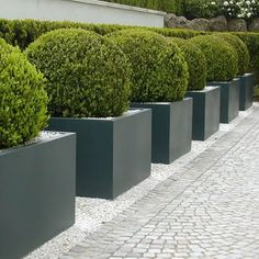 buxus balls topiary in plain grey planters and the palest stone paths